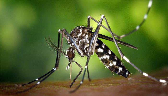 डेंगु संक्रमण गराउने टाइगर - लामखुट्टेबाट कसरी जोगिने  ?